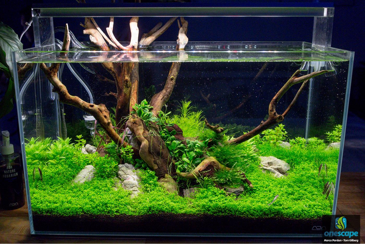 Aquarium einrichten 240l: der pflanzenaquarianer einrichtung eines ...